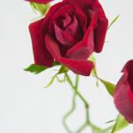 Roses InThree